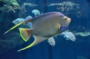 Is Distilled Water Safe to Use in A Fish Tank